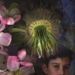 [PDF] [EPUB] Dandelion Wine Download