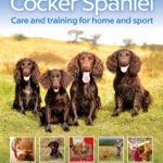 [PDF] [EPUB] The Cocker Spaniel: Care and Training for Home and Sport Download