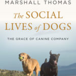 [PDF] [EPUB] The Social Lives of Dogs: The Grace of Canine Company Download