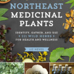 [PDF] [EPUB] Northeast Medicinal Plants: Identify, Harvest, and Use 111 Wild Herbs for Health and Wellness Download