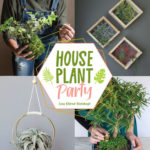 [PDF] [EPUB] Houseplant Party: Fun projects  growing tips for epic indoor plants Download
